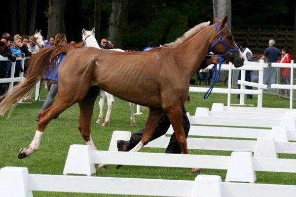 1526688 10201866902905217 6158735646268014280 n 600x400 Lettre ouverte à la présidente et au secrétaire général de la FEI pour la préservation des chevaux dendurance