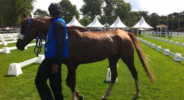 976560714 B972774646Z.1 20140525110636 000 GDD2GTJTR.1 0 Lettre ouverte à la présidente et au secrétaire général de la FEI pour la préservation des chevaux dendurance