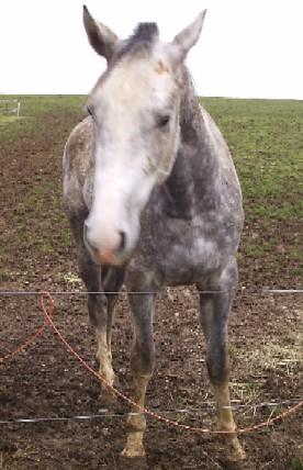 Achaeos cheval 2 Achaeos