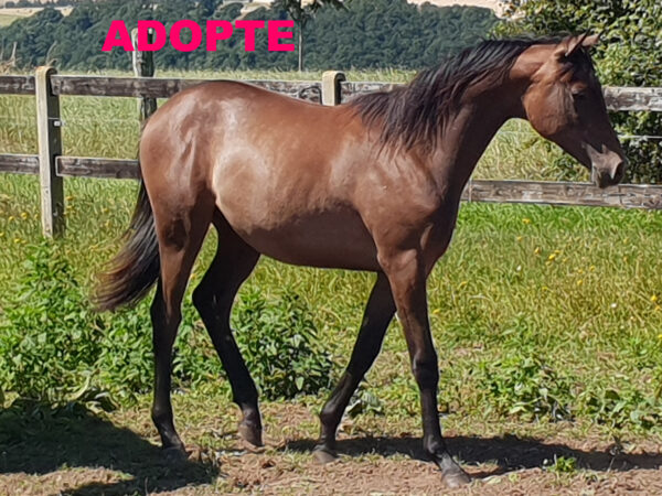 Adoption HAYKO 600x450 ADOPTION DE HAYKO