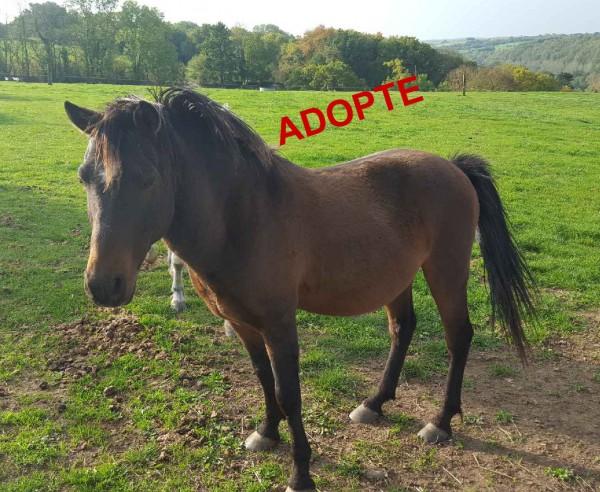 BANDITO adopte 600x492 Adoption de BANDITO