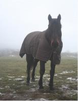 Cheval fortsite hiver Forsite adopté par Loic et valerie
