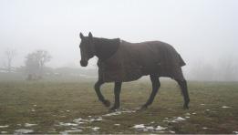 Fortsite adoption cheval Forsite adopté par Loic et valerie