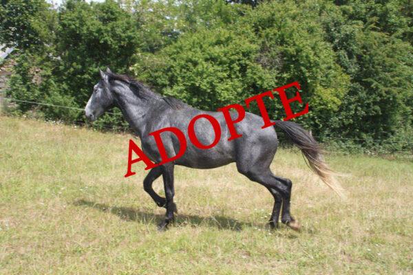 Grisou adopté 600x400 Adoption de Grisou