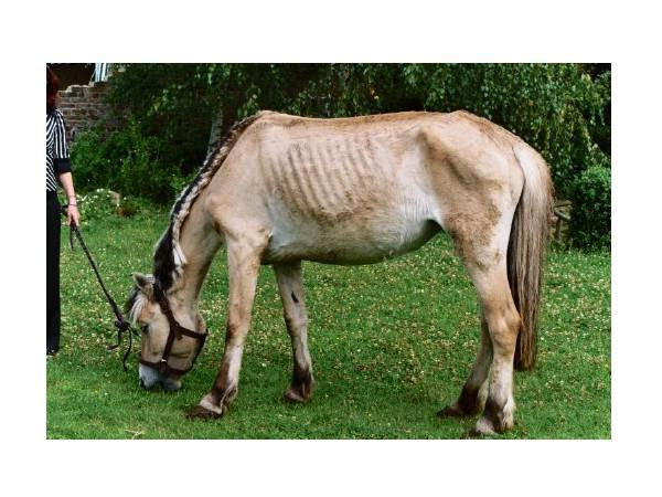 jeune cheval maigre lfpcheval. Black Bedroom Furniture Sets. Home Design Ideas