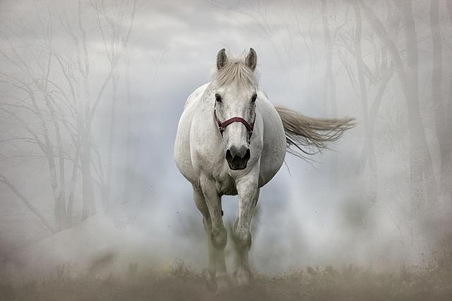 LFPC cheval