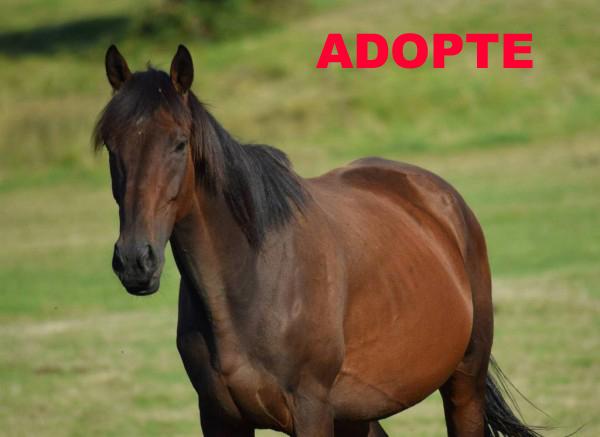 RUE ROYALE Adoption de RUE ROYALE