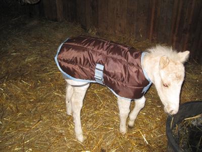 alaska defile mode cheval Un cadeau de Noël très……inattendu