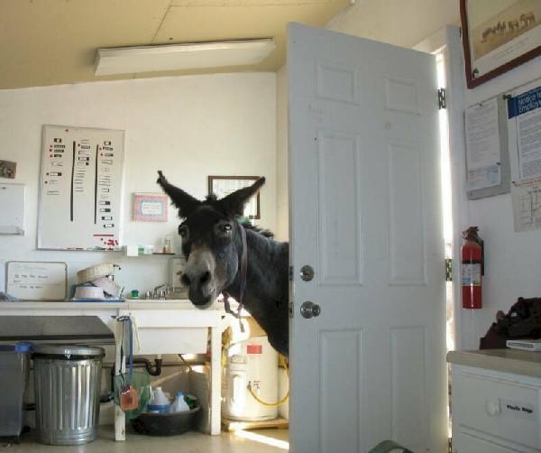 carotte cheval tete drole Photos humoristiques de chevaux