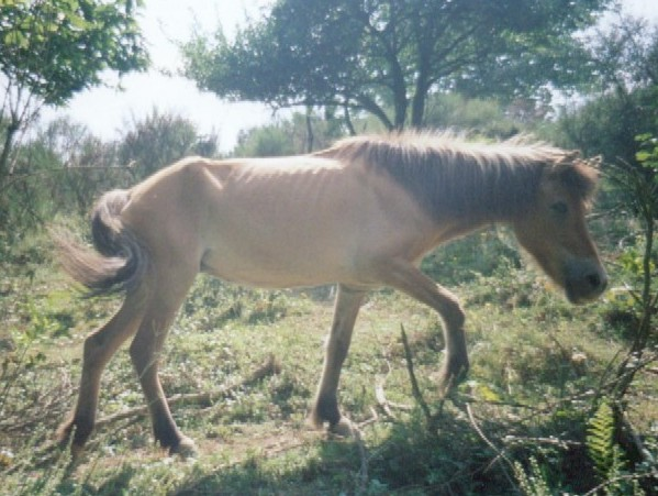 chevalmaigre10