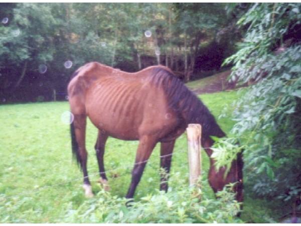 chevalmaigre3