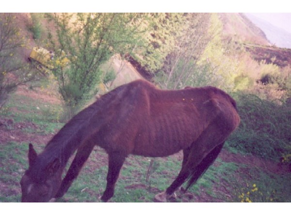 cheval maigre qui boit lfpcheval. Black Bedroom Furniture Sets. Home Design Ideas