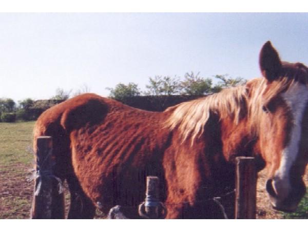 chevalmaigre6