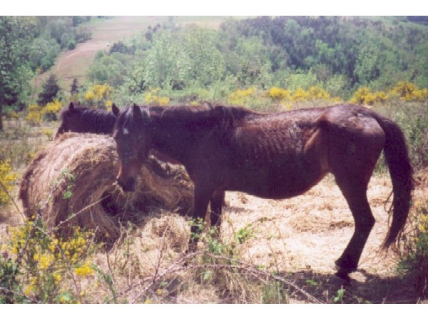 chevalmaigreetmalentretenu2