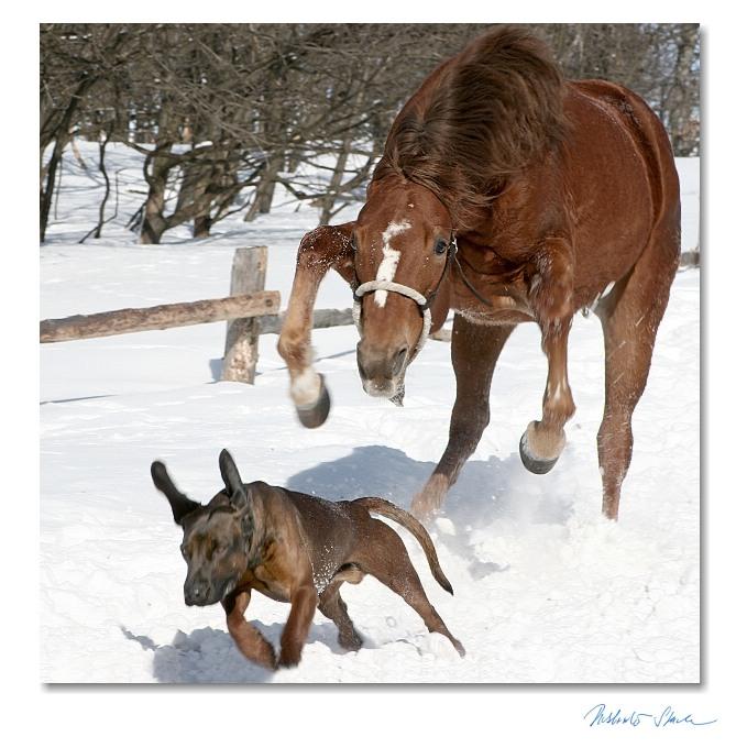 course cheval vs chien Photos humoristiques de chevaux