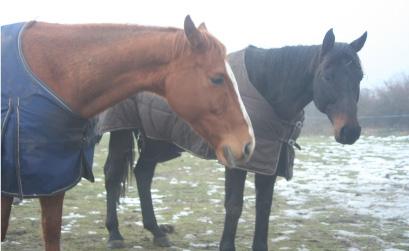 fortsite le cheval Forsite adopté par Loic et valerie