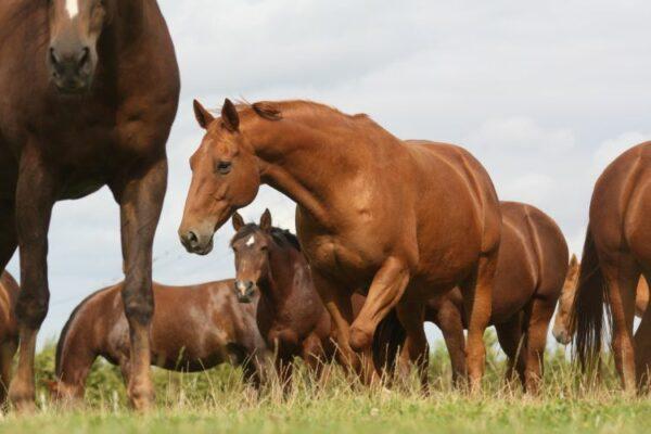 inconnu 600x400 Une Maison de Retraite pour chevaux menacée dexpropriation par un projet routier