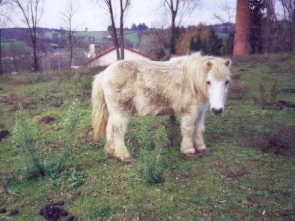 poney1