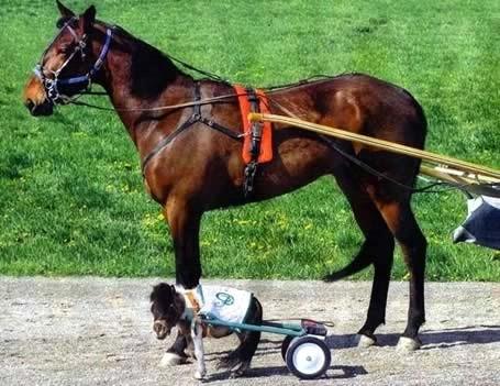 tous notre chance petit cheval grand cheval Photos humoristiques de chevaux